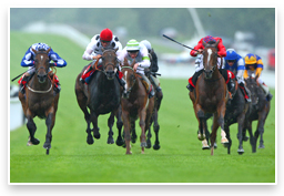 image: Horserace on a turf track