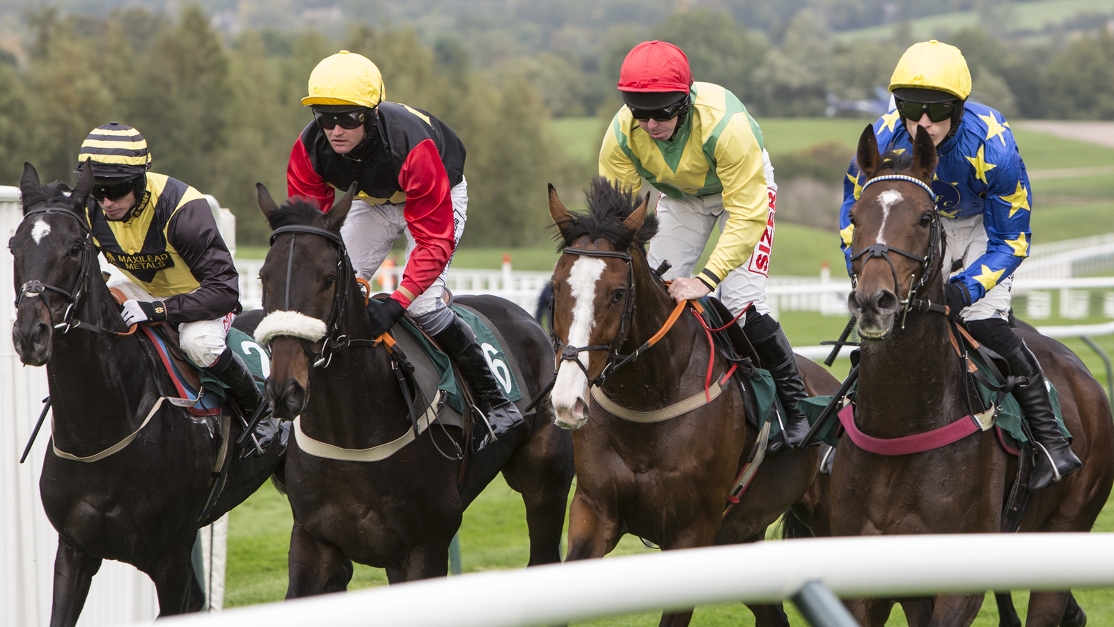 live horse racing free